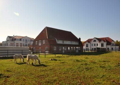 Ponys auf Hotelwiese